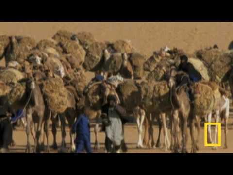 Destination North Africa