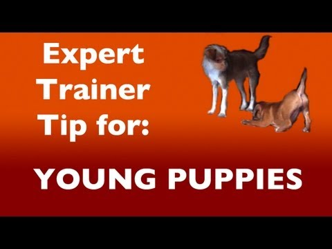 Expert Dog Training Tip: For Puppies and Distractions