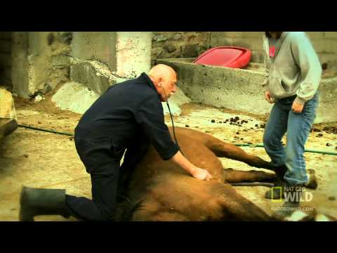 The Incredible Dr. Pol - Dr. Pol's Blog