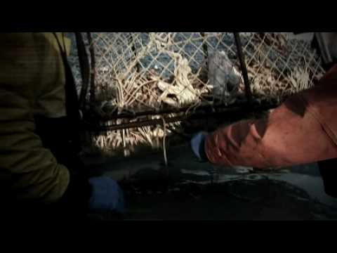 Deadliest Catch Season 5 Promo (short) *