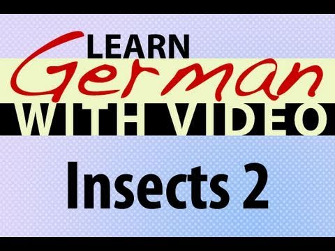 Learn German with Video - Insects 2