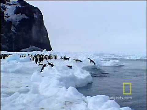 Animal Winter Games: Race to the Ice