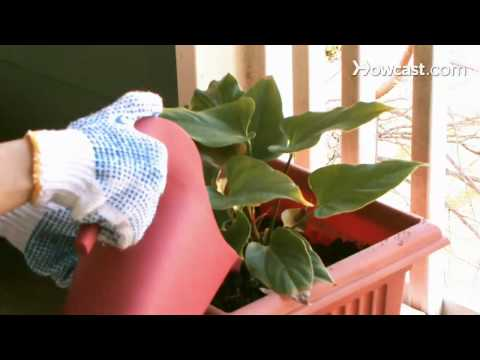 How to Protect Plants From Freezing Temperatures