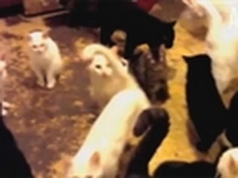 Confessions: Animal Hoarding- A Man with 30 Cats