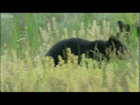Exposed on the Flats - Big Sky Bears - BBC