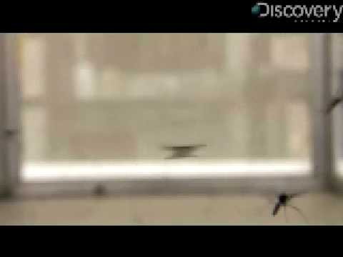 Mosquitoes Use Music To Mate