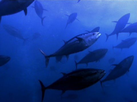 Exploring Oceans: Mediterranean
