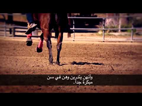 Women's Barrel Racing (Arabic Subtitles)