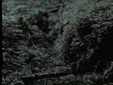 Cute baby animals - murrelet chicks - David Attenborough  - BBC wildlife