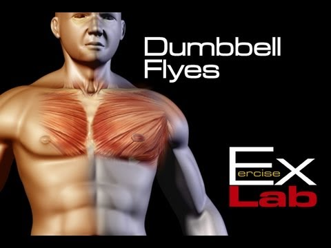 Dumbbell Flyes : The Best Chest Exercises