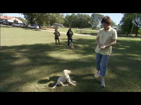 Through a Dog's Eyes | Dogism 2. Dogs Evaluate Situations Differently Than Us | PBS