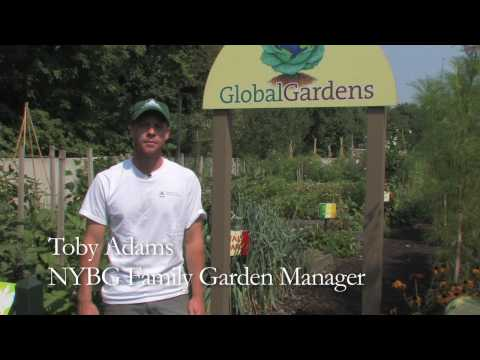 Global Gardens in the Family Garden