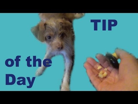 Impulse Control Game for Dog Trainers- clicker dog training tricks