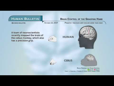 Science Bulletins: Brain Control of the Grasping Hand