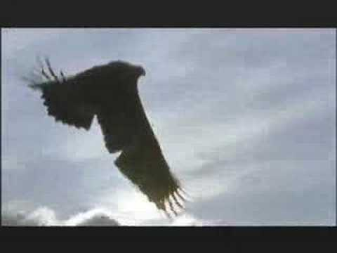 NATURE | Shadow Over The Sun: A Story of Eagles | PBS