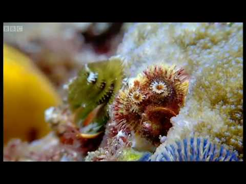 Coral reef wonderland - Wild Indonesia - BBC