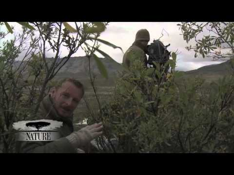 NATURE | Bears of the Last Frontier | Video Diary: Filming Arctic Grizzlies | PBS