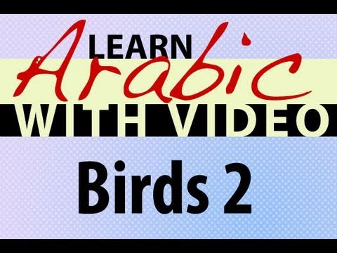 Learn Arabic with Video - Birds 2