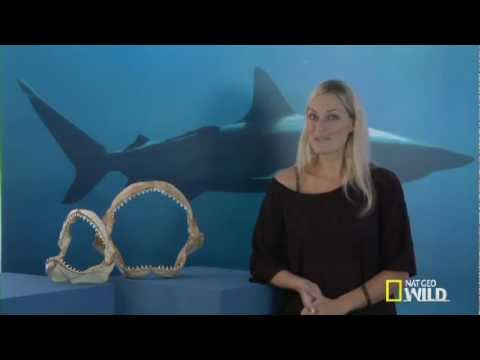 'Shark Attack Experiment LIVE' - Q&A: How to Survive a Shark Encounter