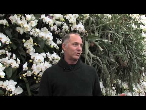 Raymond Jungles on The Orchid Show: Brazilian Modern by The New York Botanical Garden