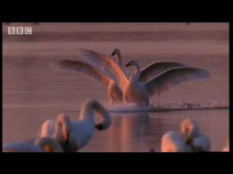 The birth of the Atlantic - Wild Europe - BBC natural history