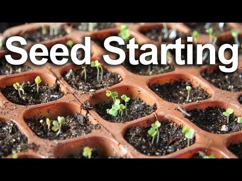 How to Start Seeds, the Gardenfork Way