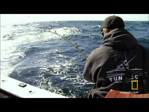 Wicked Tuna - Meet Captain Dave