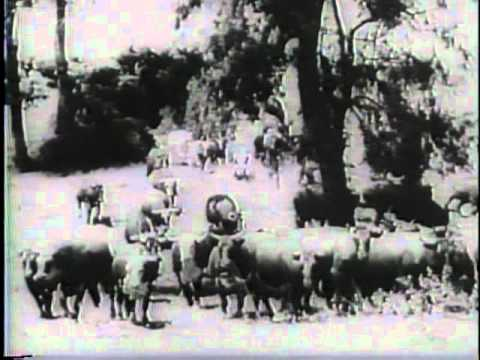 Latest News Films From The Tunisian Battle Front (1943)