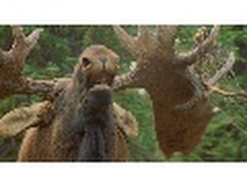 Drunken Moose