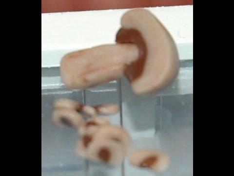 Mushroom Cane How to Make a Polymer clay miniature Mushroom by GOI