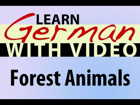 Learn German with Video - Forest Animals