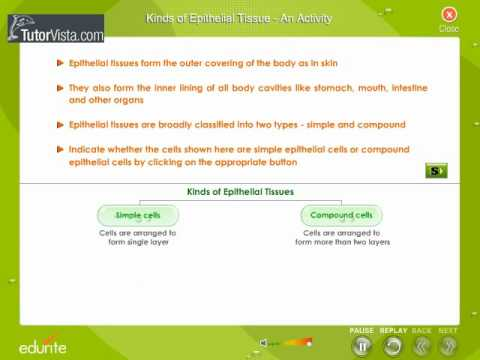 Kinds Of Epithelial Tissue An Activity