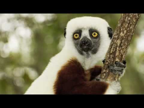 The Coolest Stuff on the Planet - The Leapin' Lemurs of Madagascar