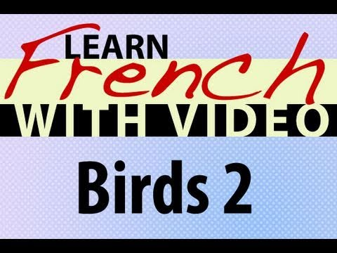 Learn French with Videos - Birds 2