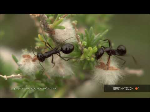 Nature's landscapes & hard-working insects