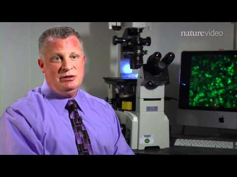 Stem cells put women on fertile ground - by Nature Video