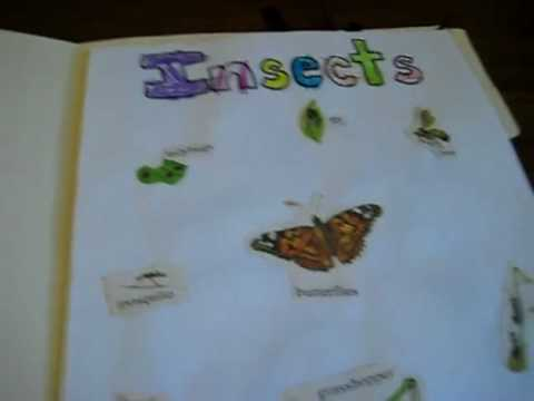 Preschool - Science. Insects folder