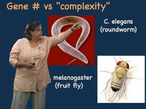 Melissa Moore Part 1: Split Genes and RNA Splicing