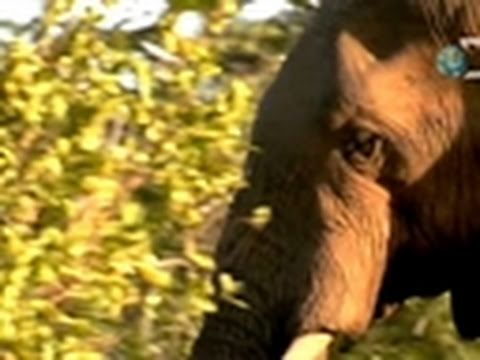 Dual Survival- Elephant Warning