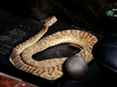 Hunter scared by snake prank!