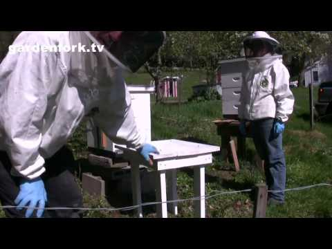 Move a Beehive : Beginning Beekeeping : GardenFork.TV