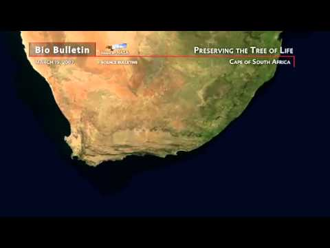 Science Bulletins: Preserving the Tree of Life