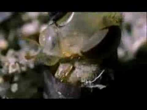 NATURE | Crime Scene Creatures | Eggs to Maggots | PBS