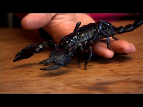 Sci Q - Hollywood Insects
