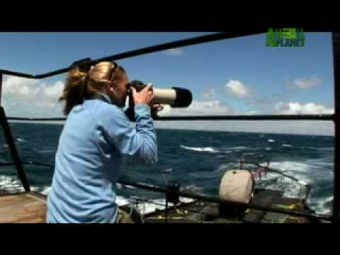 Whale Wars - The Good Ship Steve Irwin