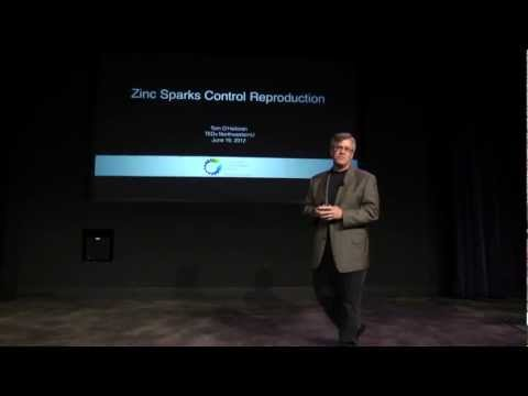 Zinc Sparks Control Reproduction: Thomas V. O'Halloran, PhD at TEDxNorthwesternU