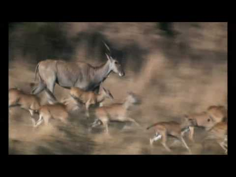 NATURE | Drakensberg: Barrier of Spears | Preview | PBS