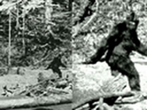 Finding Bigfoot- Real vs. Fake Evidence