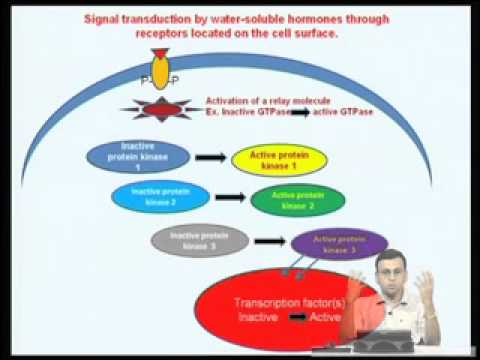 Mod-05 Lec-15 Signal Transduction Pathways - Introduction