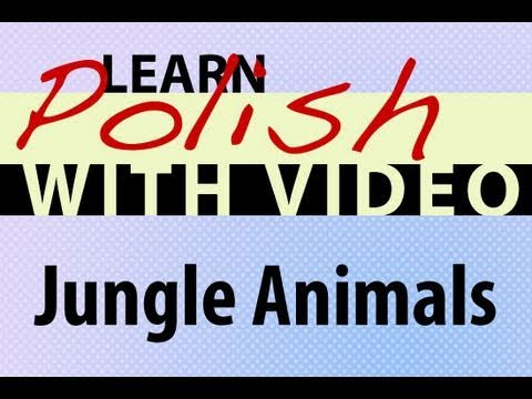 Learn Polish with Video - Jungle Animals